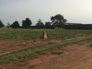 Crops in South Yola violating the federal grazing reserve demarcations. (Photo by Matthew Page)